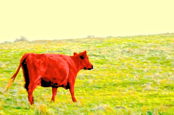 A-Red Cow 1 of 2 Red Bible Story