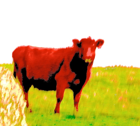 A-Red Cow 2 of 2 Red Bible Story